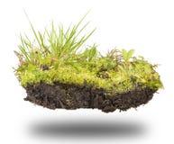 Почва леса на белизне Стоковая Фотография RF