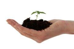 почва завода руки Стоковые Фотографии RF