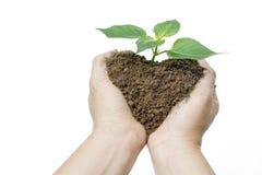 Почва и завод shap сердца среди рук женщины стоковое фото rf