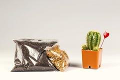 Почва и камень в пластичном пакете для beginer Кактус для украшения Стоковая Фотография