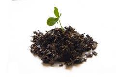 почва клевера Стоковая Фотография RF