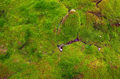 Почва покрытая мха Стоковые Изображения RF