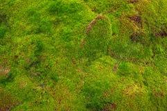 Почва покрытая мха Стоковые Изображения