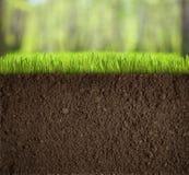 Почва под травой в лесе Стоковые Фото