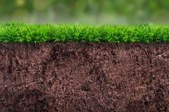 Почва под травой Стоковое Фото