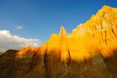 почва пущи Стоковое Фото