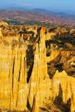 почва пущи Стоковое фото RF
