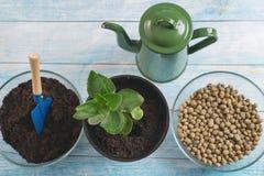 Почва, садовые инструменты, саженец на таблице стоковая фотография