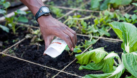 почва семян Стоковое Изображение