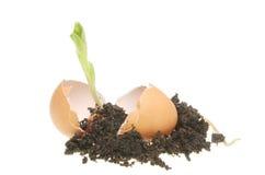 почва сеянца яичка Стоковые Изображения