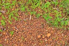 Почва с текстурой травы Стоковая Фотография