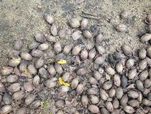 Почва текстурированная для предпосылки Стоковые Изображения