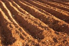 почва Стоковые Изображения RF