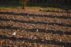 Почва Стоковое фото RF