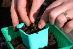 почва chili Стоковое Изображение RF