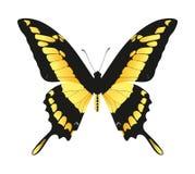 почерните желтый цвет бабочки Иллюстрация вектора