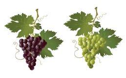 почерните зеленый цвет виноградины Стоковая Фотография
