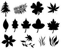 Почерните листья Стоковые Фотографии RF