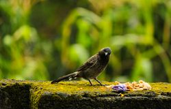 Почерните птицу Стоковые Фото