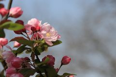 Почетность šBegonia ¼ 100 flowersï цветет Стоковая Фотография RF