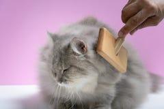 Почистьте гребень щеткой меха кота на деревянном столе Стоковое Фото