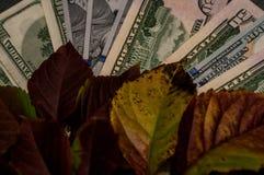 Почти доллар помещен как предпосылка Стоковые Изображения RF
