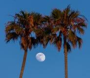 Почти полнолуние обрамленное 2 пальмами стоковые фото