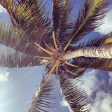 Пошатывать пальм Стоковые Фотографии RF
