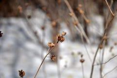Пошатывая ветви Стоковое Фото