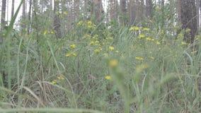Пошатывая лес сток-видео