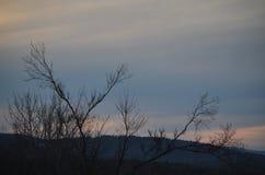 Поэт сидит в природе смотря его взгляд Стоковая Фотография