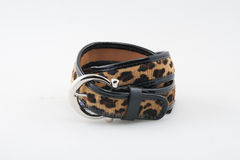 Пояс леопарда Стоковое Изображение