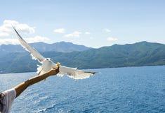 Подавать чайки Стоковое Изображение