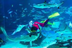 Подавая акулы в аквариуме Стоковое Фото