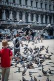 Подавая голуби в аркаде Сан Marco Венеция Стоковая Фотография RF