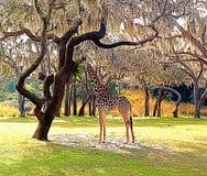 Подавая жираф стоковые фото