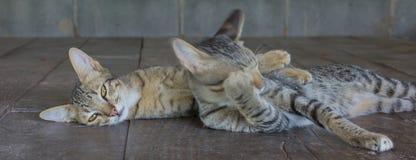 Поданные коты Стоковое фото RF