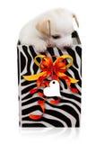 Подарок Doggy Стоковые Изображения RF