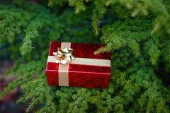 Подарочная коробка на рождественской елке Стоковое фото RF