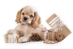 Подарочная коробка щенка и года сбора винограда Стоковая Фотография