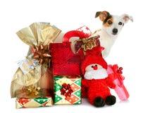 Подарочные коробки с милой маленькой собакой Стоковое фото RF