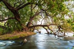 Подача реки в утесы около большого зеленого дерева стоковое фото