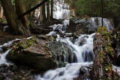 Подача реки леса стоковые фото