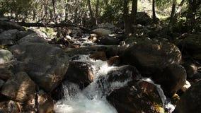 Подачи потока горы через камни, Altai, Россию видеоматериал