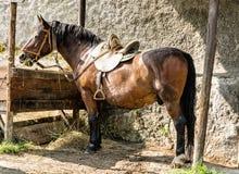 Подают лошади каштана сено, взгляд со стороны Стоковое Изображение