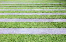 Пола травы и цементов Стоковые Изображения RF