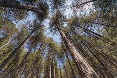 Под большими деревьями Стоковые Изображения RF