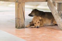 Подвал сна собаки Стоковое фото RF