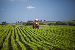 Подвергните работу механической обработке на поле арахиса под голубым небом Стоковые Изображения