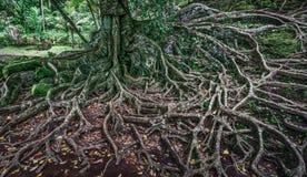 подвергли действию вал корней стоковое изображение rf